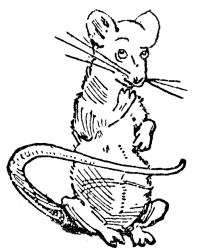 Zoned-out rat
